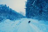 Rural landscape. Dog walking in snowy village in winter - 189720692