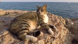 Cypriot cat resting at sunset near the sea in Ayia Napa