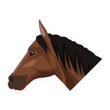 Horse head cartoon icon vector illustration graphic design