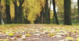 autumn golden linden alley in town falling leaves slide - 189733264