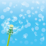 Dandelion and seeds in the air on a blue background.
