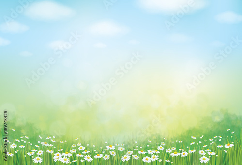 Deurstickers Lichtblauw Vector summer, green, nature background, daisy flowers field.
