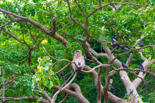 Fotobehang Aap Thai monkey resting on the branches of a dense tree