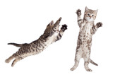 jumping cat set isolated - 189755076