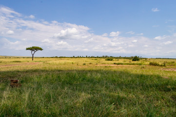 View of the savannah in Maasai Mara Park Kenya © Demande Philippe