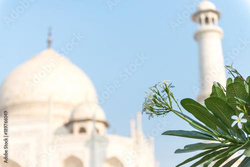 Fotobehang Plumeria Frangipani flower in front of Taj Mahal, Agra, Uttar Pradesh