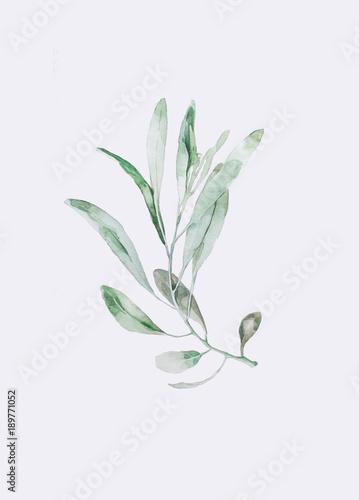 Акварельная ветвь оливы - 189771052