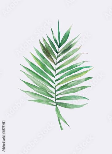 Акварельная пальмовая ветвь - 189771081