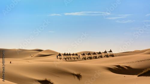 Foto op Aluminium Blauw Karawana na pustynii Sahara, Wydmy Erg Chebbi.