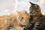 two cats lying at home - 189794291