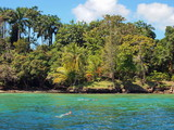 Snorkeling near a tropical shore with luxuriant vegetation, Caribbean, Bocas del Toro, Panama, Central America - 189796664
