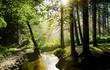 Leinwandbild Motiv Beautiful sunrise in a misty forest with sunbeams shining through the trees
