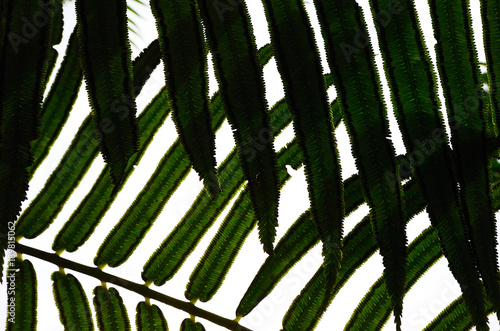 In de dag Bali Texture of palm leaves.