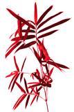 tige de bambou rouge , fond blanc