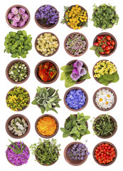 Large collection of different herbs and flowers isolated on white background. Set of fresh blooming medical herb and berries for tea