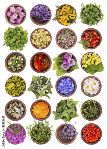 Fototapeta Large collection of different herbs and flowers isolated on white background. Set of fresh blooming medical herb and berries for tea