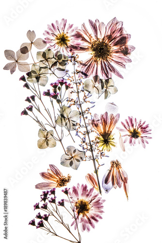 Foto Murales dry flowers on the white background