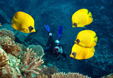 Underwater photographer, coral reef and School of Masked Butterfly Fish
