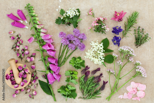 Herbal medicine with herbs and flowers used in alternative remedies with fresh herbs and flowers on rough brown paper background. Top view.