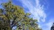Old oak nature