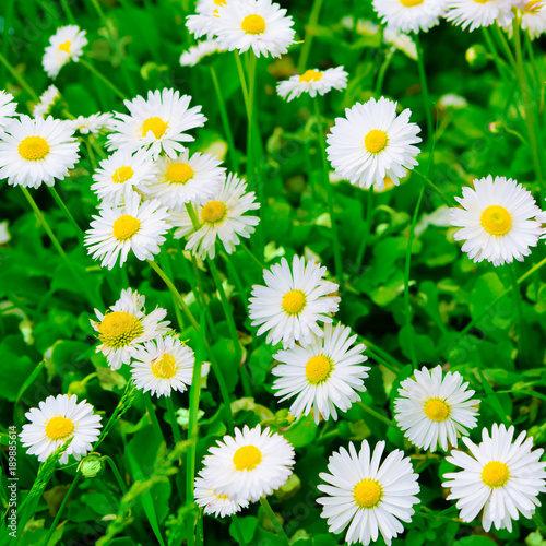 Poster Groene Colorful Nature Spring flower Background