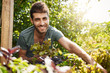 Close up outside portrait of young beautiful bearded hispanic man in blue shirt smiling in camera, collecting salad leaves in garden, watering plants, spending summer morning in countryside house.