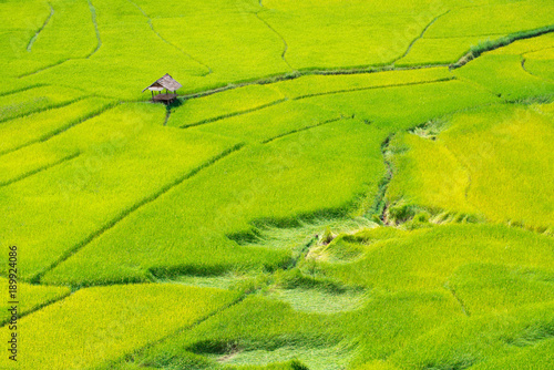 Poster Lime groen Green Terraced Rice Field in Nan, Thailand.