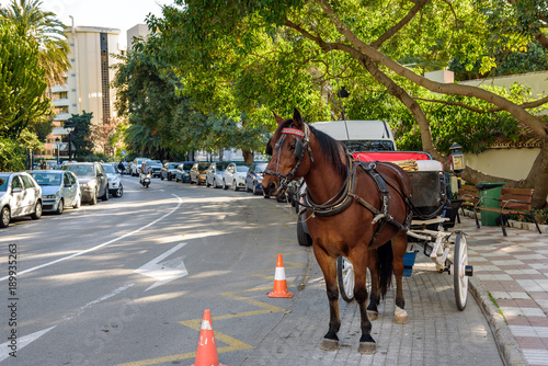Horse carriage is staying at street of Marbella town, Spain