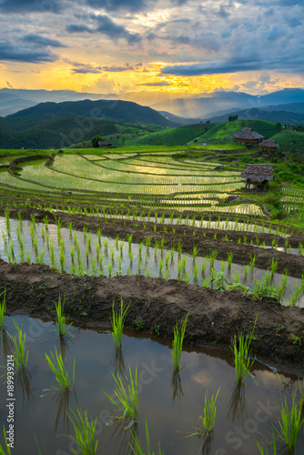 In de dag Rijstvelden transplant rice terrace seedlings field in Ban Pa Bong Piang, Chiagmai, the north of thailand,