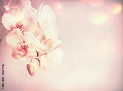 kwiatuszki-na-stonowanym-tle