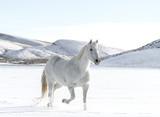 White on White - 189967888