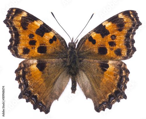 Aluminium Fyle Large tortoiseshell butterfly