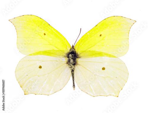 Aluminium Fyle Common brimstone butterfly
