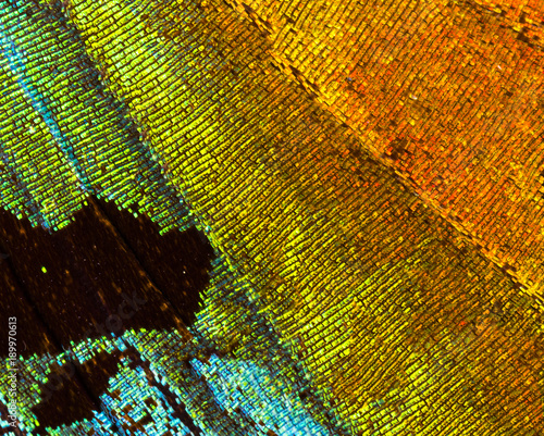 Aluminium Fyle Madagascan sunset moth (Chrysiridia rhipheus) detail of a wing