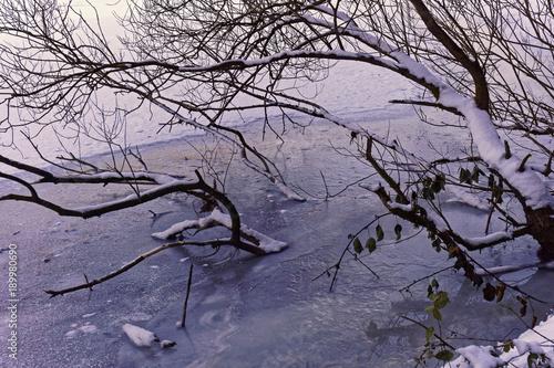Foto op Plexiglas Lavendel tree in a frozen lake, winter wonderland