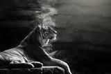 Sumatran tiger - 189980886