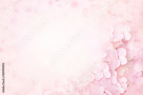 Foto Spatwand Hydrangea Summer blossoming hydrangea, flower bokeh background, pastel and soft floral card