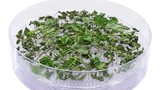 Time-lapse of drying (dehydrating) melissa (Melissa officinalis) herb 1a2 in UHD 4K format  - 189995406