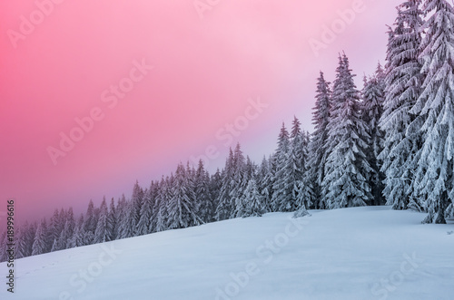 Fotobehang Lichtroze Winter forest in Beskidy mountains, Poland