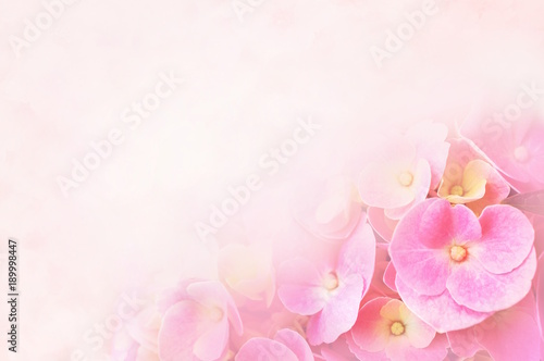 Fotobehang Hydrangea Summer blossoming hydrangea, flower bokeh background, pastel and soft floral card