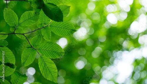 green leaves - 190007652