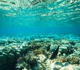 Tranquil underwater - 190007807