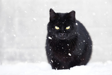 black cat and snow, snowfall