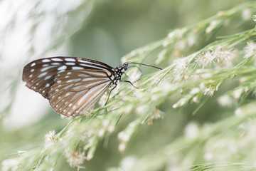 Butterfly on flower in nature outdoor