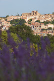 Village and lavender in Provence - 190029299