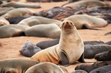 Colony of fur seals in Namibia - 190033001