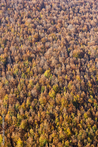 Foto op Plexiglas Herfst wood texture of autumn tree