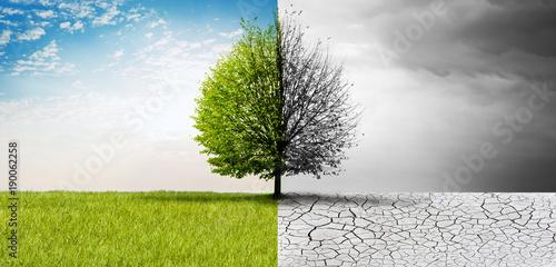 Staande foto Natuur Natur im Wandel