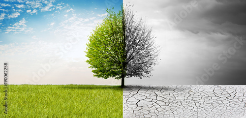 Deurstickers Natuur Natur im Wandel