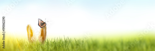 Deurstickers Gras Osterhasenohren